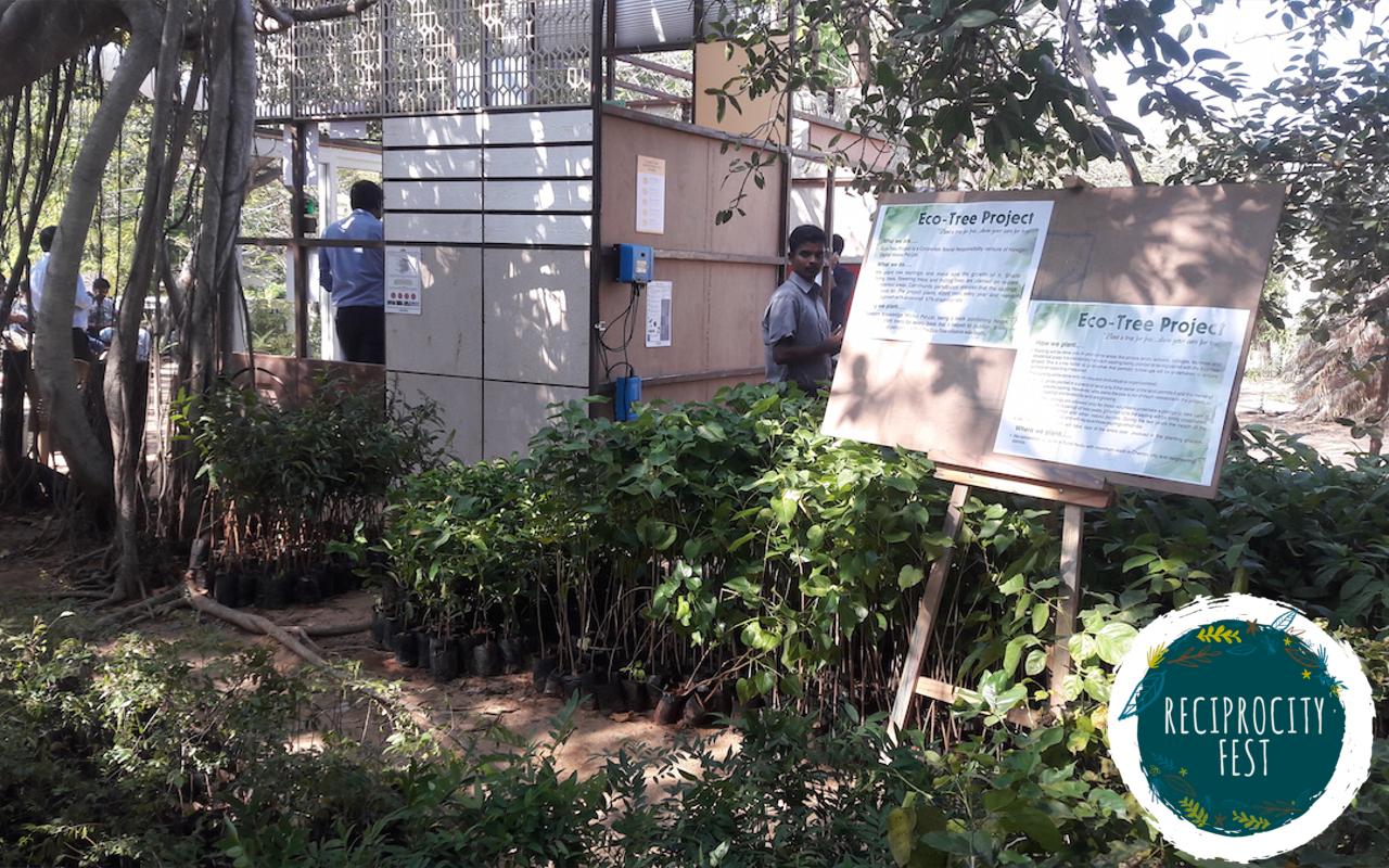 Eco Bazaar Tree Saplings 2