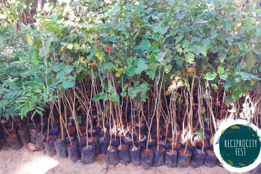 Eco Bazaar Tree Saplings 3