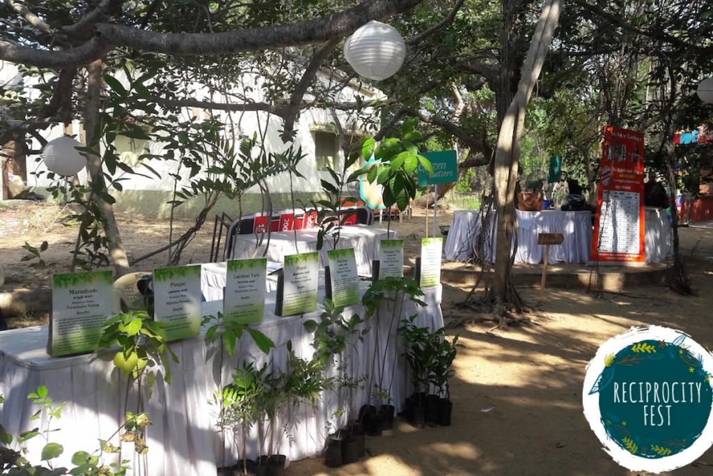 Tree Saplings 2